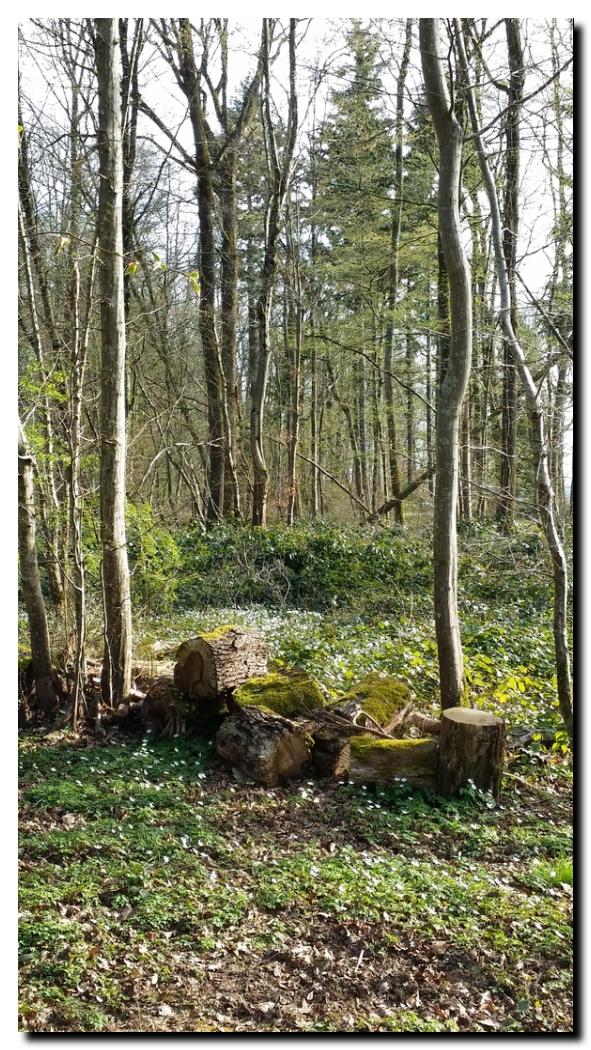 Promenade dans une forêt de l'Aube | © PPierre Kobel